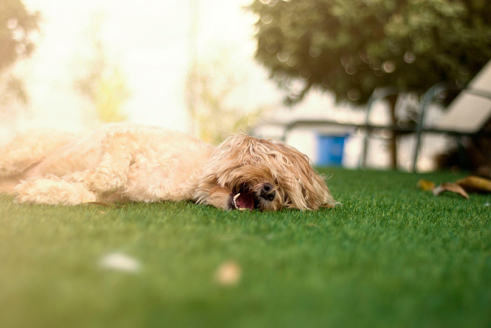 כלב נח בחצר
