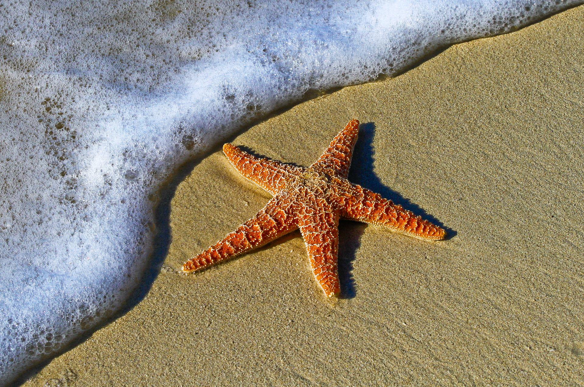 כוכב ים על חוף הים