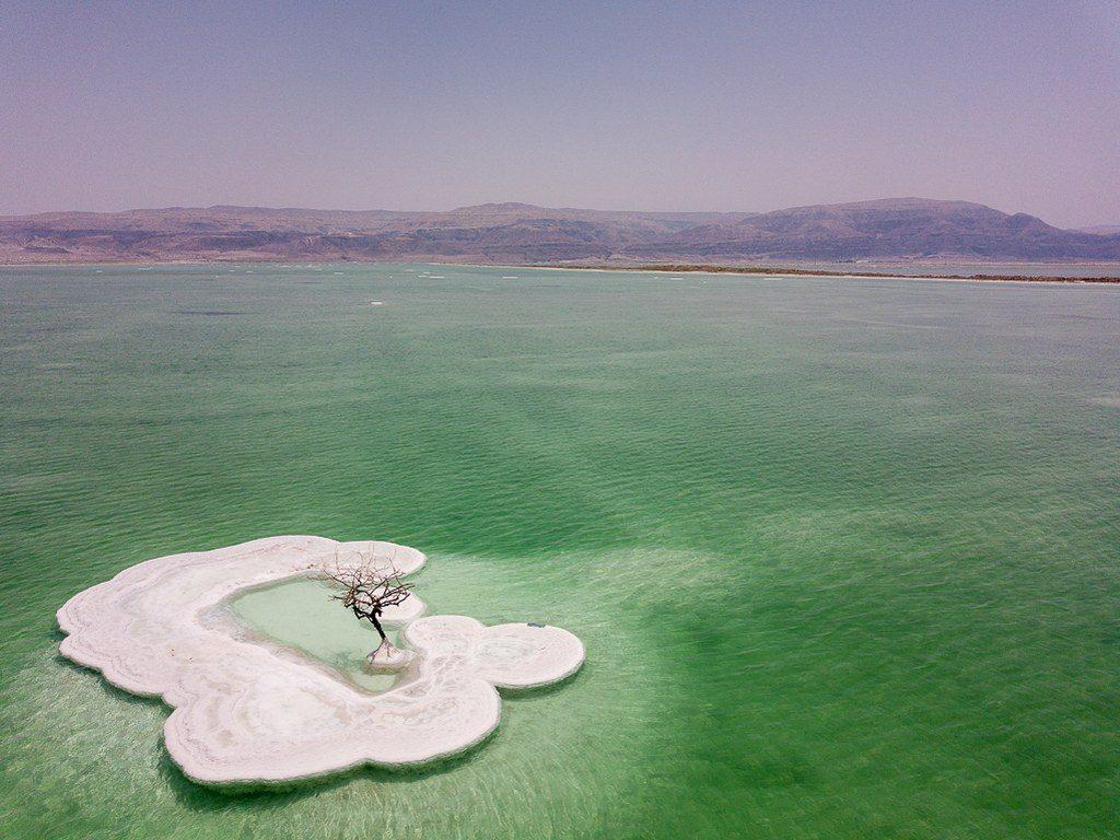 העץ הבודד בים המלח