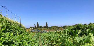 סיור בחווה אורגנית
