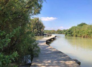 הגשר הצף בשמורת עין אפק