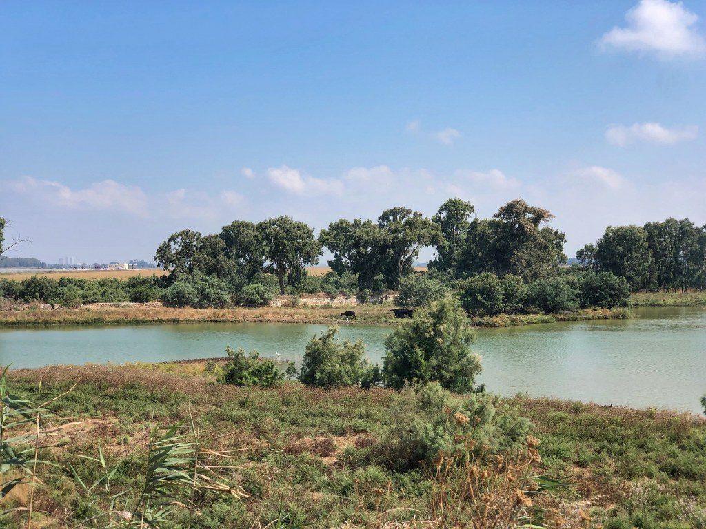 תצפית נוף על מרחבי הגליל וחלקת האחו
