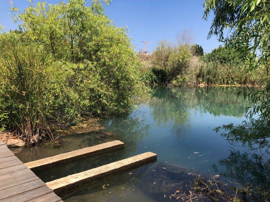בריכת ביצות בשמורת טבע