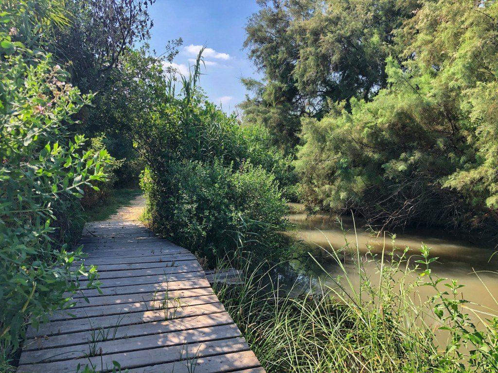 גשר צף מעל האגם בעין אפק שבעמק עכו