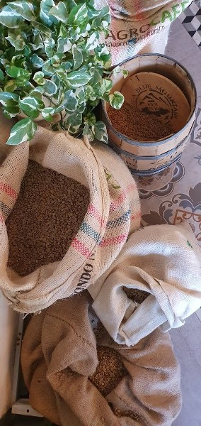 פולי קפה באגרוקפה שבזכריה