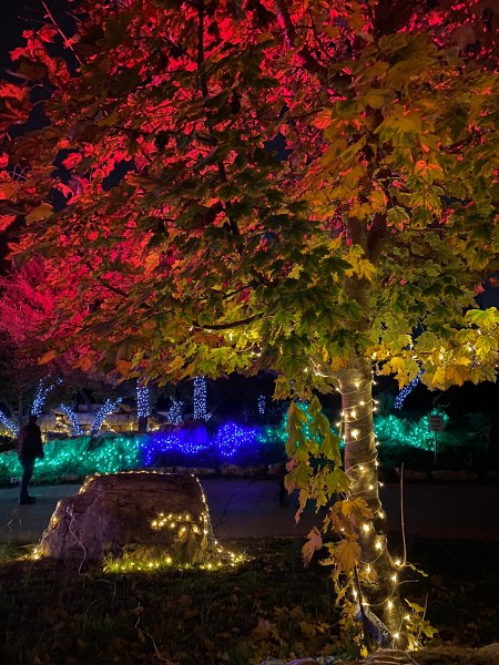 חגיגות חנוכה 2020 בגן הבוטני בירושלים
