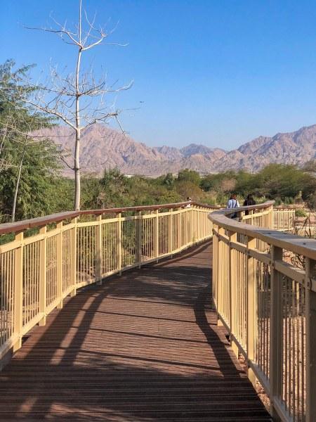 גשר בפארק הצפרות באילת