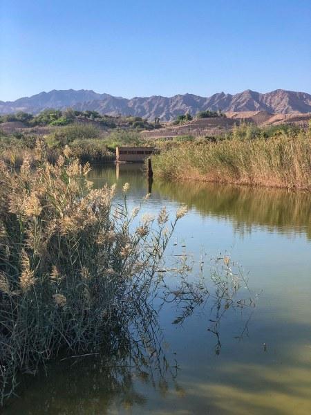 אגם בפארק הצפרות באילת