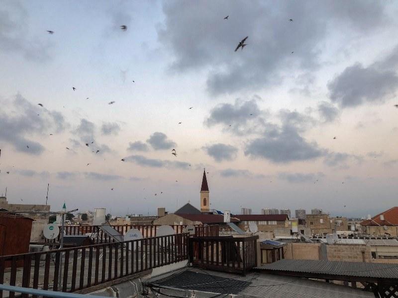 תצפית מגג מלון ערבסק